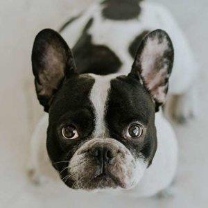 Calm-Dog